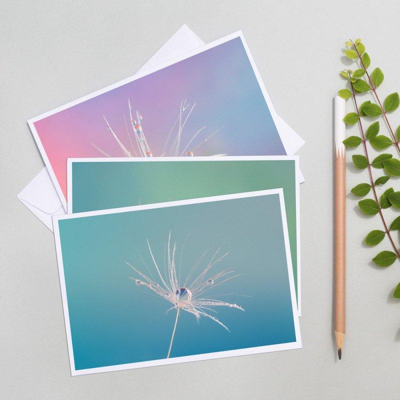 lot de cartes postales pissenlit photographe professionnel