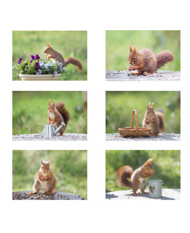 Photos Nature écureuil