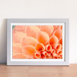 Photo dahlia corail et petites gouttes, décor botanique
